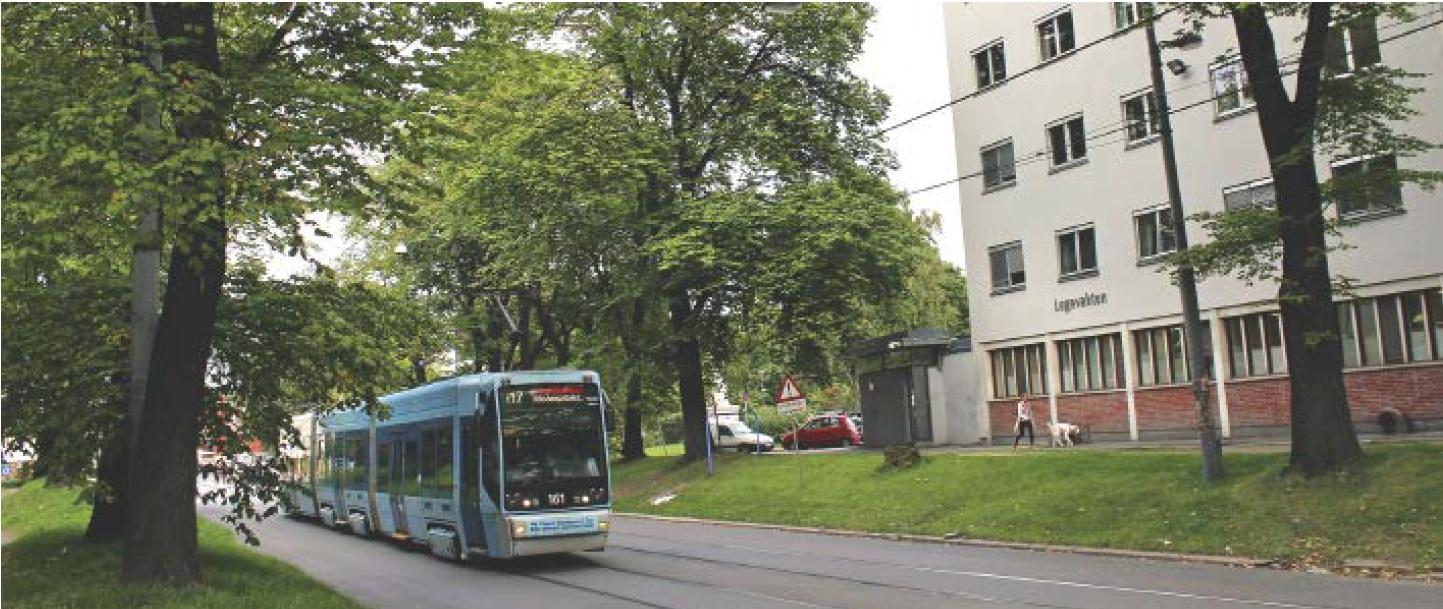 Beplantningsanlegg ved Krohgstøtten: I 1842 var «Promenadepladsen ved Krohgstøtten» på det nærmeste fullført. Parken ble senere nedbygd, men noen av de opprinnelige trærne står der fortsatt, om enn litt medtatte, langs Storgata ved Legevakta. Foto: Heidi Voss-Nilsen